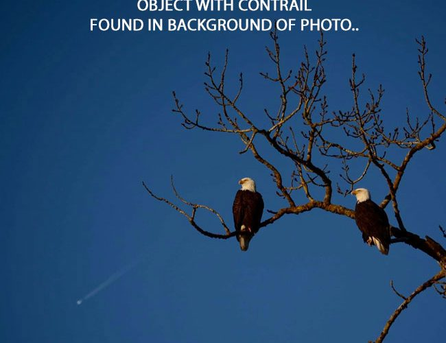 Circular Object With Tail Found in Photo of Eagles.